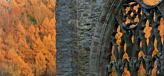 Tintern Winter I (ye sons of art) Tags: tintern abbey ruin church religion heritage history henryviii dissolution winter sun wales uk
