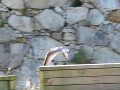 IMG_4609 (jesust793) Tags: gaviotas seagulls pájaros birds naturaleza nature
