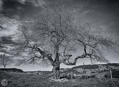 Herbstwandern im Allgäu (Bajadere) Tags: baum bäume tree natur allgäu herbst wandern landschaft