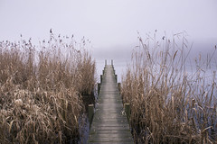 Sadness (Bernd Schunack) Tags: sadness reed river water jetty fog mist havel berlin germany panasonic lumix gx9