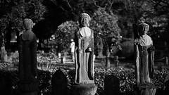 20191116_【Ashikaga snap 写真家と撮り歩き 第2回 大門美奈】_05_6_Monochrome (foxfoto_archives) Tags: sigma fp mc21 40mm f14 dg hsm a018 developed by photo pro 670 japan tochigi ashikaga snap 日本 栃木 足利 スナップ