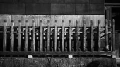 20191116_【Ashikaga snap 写真家と撮り歩き 第2回 大門美奈】_02_6_Monochrome (foxfoto_archives) Tags: sigma fp mc21 40mm f14 dg hsm a018 developed by photo pro 670 japan tochigi ashikaga snap 日本 栃木 足利 スナップ