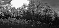 "GERMANY, Rund um Leonberg, 76845/12160 (roba66) Tags: landschaft landscape paisaje nature natur naturalezza roba66 germany deutschland badenwürttemberg reisen travel explore voyages stadt leonberg agriculture field fields meadow wiese monochrome blackwhite bw blancoynegro swbw negro blackandwhite blancoenero byn bretoebranco einfarbig ""schwarzweis"" roba66germanydeutschlandroba66badenwürttemberglandschaftlandscapepaisajenaturenaturnaturalezza baum bäume tree trees albores arberi arbes wald forest"