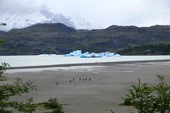 Calved icebergs from the Grey Glacier (halifaxlight) Tags: chile torresdelpainenationalpark isladeloshielos mountain iceberg lake beach trees mist snow visitors hikers nature patagonia