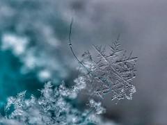 A tiny capture (jilllian2) Tags: frozen nature bokeh iphone snowcrystal snowflake macro