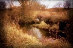 Before the Snow (Dave Linscheid) Tags: creek stream autumn fall texture butterfieldcreek butterfield watonwancounty minnesota