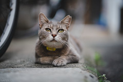 猫 (fumi*23) Tags: ilce7rm3 sony sel85f18 emount 85mm fe85mmf18 feline a7r3 animal alley street katze cat chat gato neko bokeh dof depthoffield ねこ 猫 ソニー