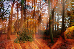 Burning Autumn (Alfred Grupstra) Tags: autumn tree leaf nature forest yellow orangecolor season outdoors landscape goldcolored woodland red parkmanmadespace october multicolored scenics beautyinnature sunlight footpath
