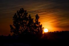 evening atmosphere (husiphoto) Tags: sonne sun landschaft landscape natur nature licht light sunset sonnenuntergang dezember december nikon z6 tamron 100400mm baum tree orange wolken clouds himmel sky