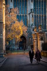 Autumn at King's (Mister Oy) Tags: cambridge autumn fall seasons tree light sun orange fujixpro2 fuji50140mmf28 students walking oxbridge university kings college clare trinity golden