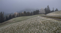Raureif auf der Alp (Aeschbacher Hilde) Tags: raureif emmental schweiz alp flickrfridaycold landschaft 31219