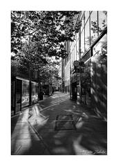 City Centre Shadows (PeteZab) Tags: bw blackandwhite monochrome mono light reflection city urban tree nottingham uk peterzabulis