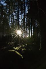 Le matin des magiciens (ericdu29) Tags: forêt lumière bois nature levé sunrise paysage bretagne wood forest