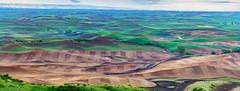 100 megapixel panaroma!! (pankaj.anand) Tags: 2019 landscape sony sonya73 sonya7iii landscape2019 palouse palousefalls green outdoor earlymorning morning morningshoot seattlephotographer zoom sonyzoom 70200 steptoebuttestatepark fields luminar luminar4