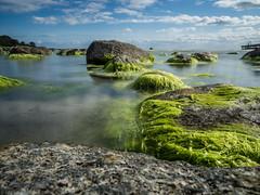 Those were the days (katrin glaesmann) Tags: sweden holidays sandviken blekinge sea seaweed algae algen rocks boardwalk