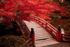 Red Bridge (Bastian.K) Tags: sigma 35mm 12 art dg dn red bridge wood wooden holz holzbrücke brücke leave leaves blatt blätter herbst autmun japan