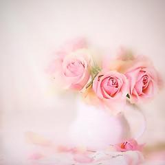 Three beauties (Birgitta Sjostedt) Tags: roses still stilllife pot table lace blossom garden plant beauty closeup texture topaz