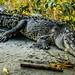2019 - Mexico - Zihuatanejo - 21 - Restaurante El Manglar Crocodile