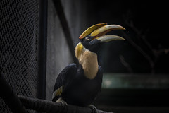 The Hornbill (ggimagination) Tags: ggimagination⠀ gouravguptaphotography⠀ bird nature animal wildlife photography instagram naturephotography photooftheday instagood wildlifephotography animallovers zoo birds animals wild travel birdsofinstagram naturelovers canon natgeo bhfyp