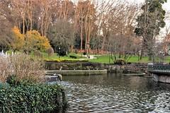 Parque Quiñones de León-_DSC2156 (peruchojr) Tags: naturaleza parque árbol agua lago estanque aves invierno castrelos vigo galicia