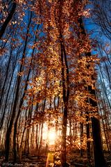 """Tree of Awakening"" (Peter Daum 69) Tags: farbe color sunset sonnenuntergang lanscape landschaft sonne sun licht light lightwork artwork art scenery sunrise sonnenaufgang magic magie dream traum nature natura natur stunningnature canon eos baum tree bäume trees wald forest"