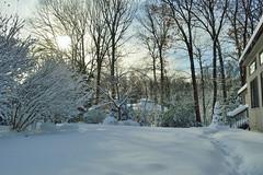 Snow Day (robjvale) Tags: nikon d3200 snow cold morning