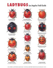 Poster Ladybugs Los Angeles Field Guide (smallpocketlibrary) Tags: free book bookspdf pdf medicine psychology ebook booksmedicine nutrition cosmos universe science physics technology astronomy neurology surgery anatomy biology chemistry mathematics university infographic picture photography animal wildlife fitness insects amazing wonderful incredibility beauty awesome nature smallpocketlibrary