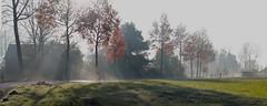 Morning dew - Bazel - Belgium (roland_tempels) Tags: supershot nature belgium trees bazel sunlight sun landscape kruibeke dawn autumn