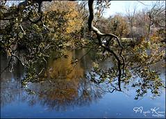 Still Branching Out... (angelakanner) Tags: canon70d tamron18400 frankmelvillepark setauket longisland branches water reflection