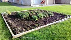 Flowerbed in Suffolk House gardens 3rd December 2019 002 (D@viD_2.011) Tags: flowerbed suffolk house gardens 3rd december 2019