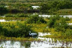SouthPadreIsland_294 (allen ramlow) Tags: south padre island texas tx sony alpha