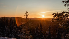 Golden light (A.Koponen) Tags: canon eosr rf50mmf12l hoya lseries kuopio suomi finland finnishphotography forest sunset sunsetphotography sunsetsunrise nature naturephotography finnishnature thisisfinland sky