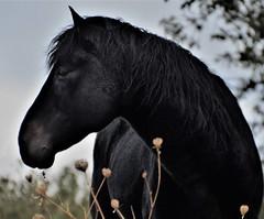 Caballo (JCMCalle) Tags: caballo horse jcmcalle image photohoot fhotografy photofrapher nofilter naturaleza nature naturephotography nofilters