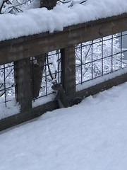 IMG_6875 (Marshen) Tags: squirrel snow