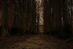 Au bout du chemin (isabelle bugeaud) Tags: allée arbre lavèrune automne châteaudelavérune parc tronc feuilles