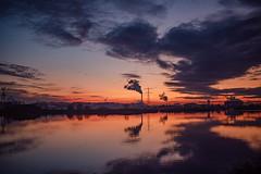 Twiske Three (Roderick van der Steen) Tags: sonyalpha sonya7s sony a7s zeissmilvus50mmf14distagon zf2 zeiss milvus1450 landscape landsmeer water reflections dusk bluehour netherlands