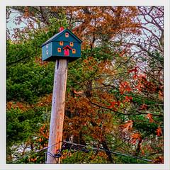 The Penthouse (Timothy Valentine) Tags: 1119 telegraphtuesday intheneighborhood birdhouse line pole 2019 large eastbridgewater massachusetts unitedstatesofamerica
