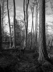 On the trail. (wojszyca) Tags: fuji gsw680iii 6x8 120 mediumformat fujinon sw 65mm kodak tmax 400 400tmy2 hc110 epson v800 forest trees nature trail hiking mountains outdoors