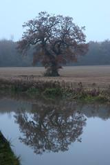 evening tree (kokoschka's doll) Tags: tree reflection autumn evening canal nuneaton