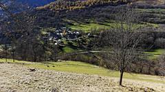 Village de Benque dessous (olivier.amiaud) Tags: montagne village pyrénées benque prairie pâture bétail sony arbres alpha paysage forêt 6000