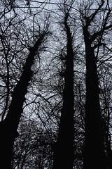 019 (onesecbeforethedub) Tags: vilem flusser technical images onesecbeforetheend onesecbeforethedub onesecaftertheend photoshop exposure contemporaryart streamofconsciousness vassilis galanos oslo norway winter spooky eerie uncanny melancholy melancholic tree trees leaves cold