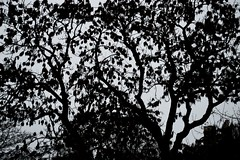 016 (onesecbeforethedub) Tags: vilem flusser technical images onesecbeforetheend onesecbeforethedub onesecaftertheend photoshop exposure contemporaryart streamofconsciousness vassilis galanos oslo norway winter spooky eerie uncanny melancholy melancholic tree trees leaves cold