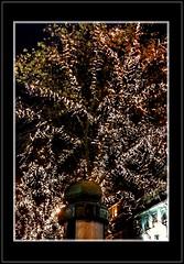 Comme un arbre dans la ville ... (Charlottess) Tags: nikon5300 2019 décembre lumière illumination paris
