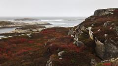 Polly's Cove (Boganeer) Tags: pollyscove novascotia nouvelleecosse red granite rocks shore shoreline ocean atlanticocean maritimes maritime atlanticcanada canada canon canoneos canon6d seascape