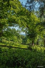 From Leith Hill Woods, a view of the distant South Downs. (Scotland by NJC.) Tags: hill تَلّ colina 小山 brdo kopec bakke forhøjning landskabet heuvel mäki colline hügel λόφοσ collina 丘 언덕 ås wzgórze deal холм backe เขาเตี้ยๆ tepe coğrafya пагорб đồi trees foliage vegetation arboretum شَجَرَة árvore 树 drvo strom træ boom árbol puu arbre baum δέντρο albero 木 나무 tre drzewo copac дерево peaceful calm still quiet serene undisturbed pacífico 和平的 miran fredelig vredig leithhillwoods surrey england