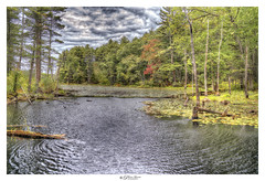 Lilipad's Edge. Great Brook Lake, MA USA (Pearce Levrais Photography) Tags: landscape lake leaf leaves autumn autumnleaves autumnal outdoor outside sky cloud water pond sony a7r3 ilce7rm3 lilipad tree trees forest foilage thebestofhdr