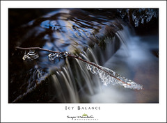 Icy Balance (DKNC) Tags: booneforkcreek blueridgeparkway northcarolina nc winter water ice frozen stream creek cascade daleking