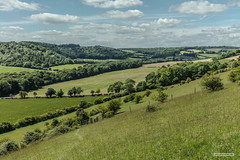 Turville Valley in the Chiltern Hundreds, Buckinghamshire. (Scotland by NJC.) Tags: valley vale gorge dale glen strath cwm coombe rift faultline وادٍ 山谷 dolina údolí dal vallei valle laakso vallée tal 谷間 계곡 trees foliage vegetation arboretum شَجَرَة árvore 树 drvo strom træ boom árbol puu arbre baum δέντρο albero 木 나무 tre drzewo copac дерево peaceful calm still quiet serene undisturbed paisible friedlich ειρηνικόσ 平和な 평화로운 turvillevalley buckinghamshire england