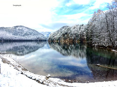 Reflections in the Alpsee in Schwangau (Tommysfotografie) Tags: schwangau montagne bergen mountain mountainview iphonese iphone behindthelens natura natuur natur nature bos wald forest forêt landscapeview landscapephotography landscapephoto landscapeshot landscapepicture landscapeperfection alps thealps alpen bavaria bayern allemagne tyskland germany duitsland deutschland wandelen wandern hikingadventures hike peoplewhohike hikinghobby hiking arbor arbres bomen bäume trees wintertree alplake alpsee reflectionlake lago lac meer see lakeview lake snow schnee nieve neve sneeuw winterlandscape winterlandschap winterlandschaft winterwonderland winter reflectionshot reflectionphoto reflectionphotography reflection