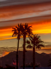 Palm Trees And Layered Sunrise (http://fineartamerica.com/profiles/robert-bales.ht) Tags: arizona foothills forupload haybales land people photo places states sunsetorsunrise sunrise sunset redsky twilight yellow clouds landscape spectacular desertphotography panoramic surreal sublime sonora inspirational path morning silhouette scenic sunrisephotography red sonoradesert robertbales desertecosystem desert nature sky yuma gilamountains dusk dawn scene colorful tranquil vibrant outdoor black beauty verical layered